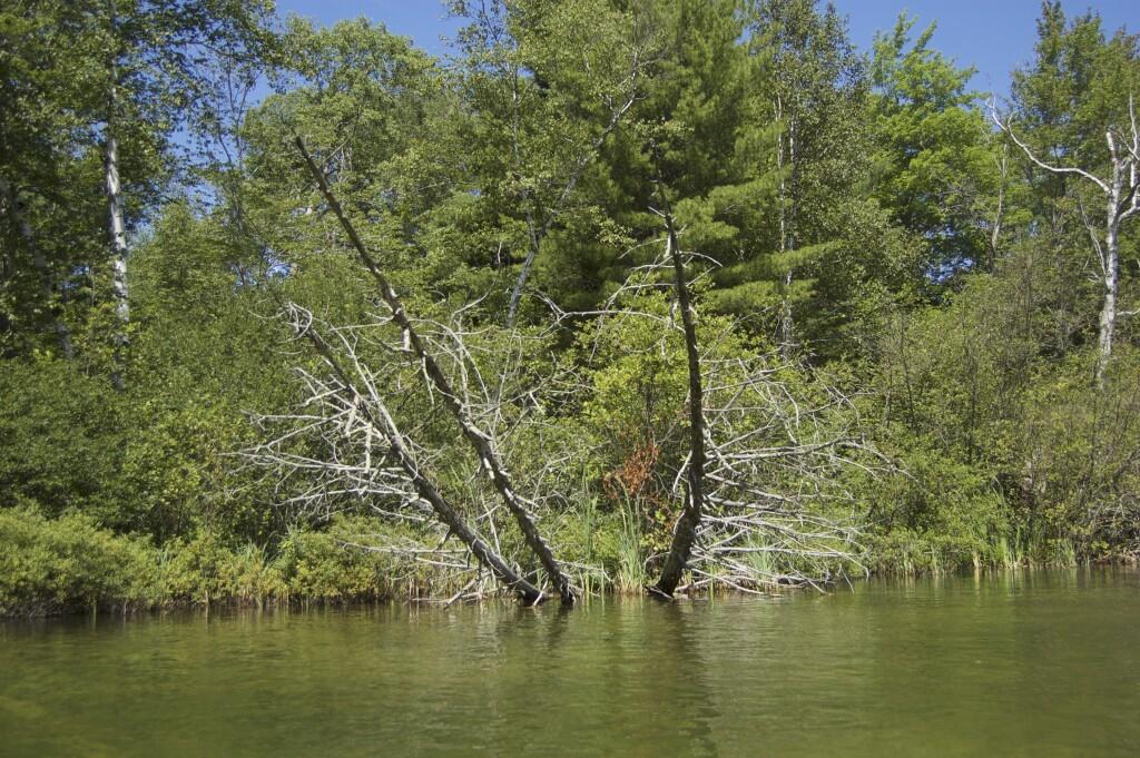 Platte River Kayak Sleeping Bear Dunes 12