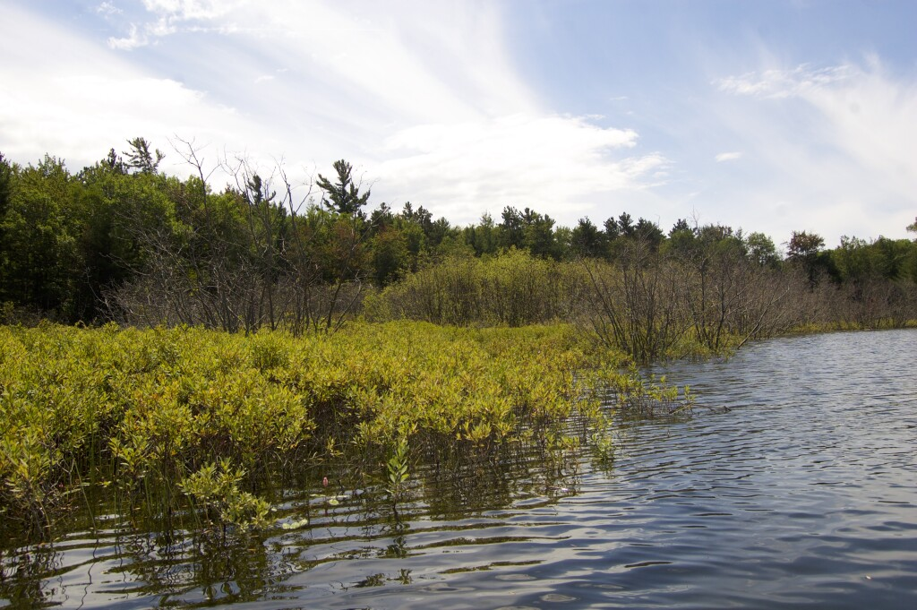 Platte River Kayak Sleeping Bear Dunes Marshy Shoreline