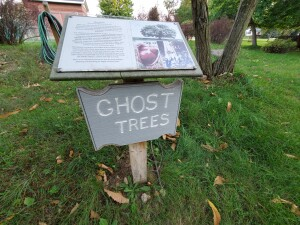 Leik Grove Ghost Trees Portland Mi