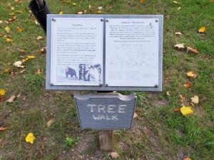 Leik Grove Tree Walk Portland MI