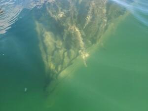 Drummond Island Scammon Cove Shipwreck