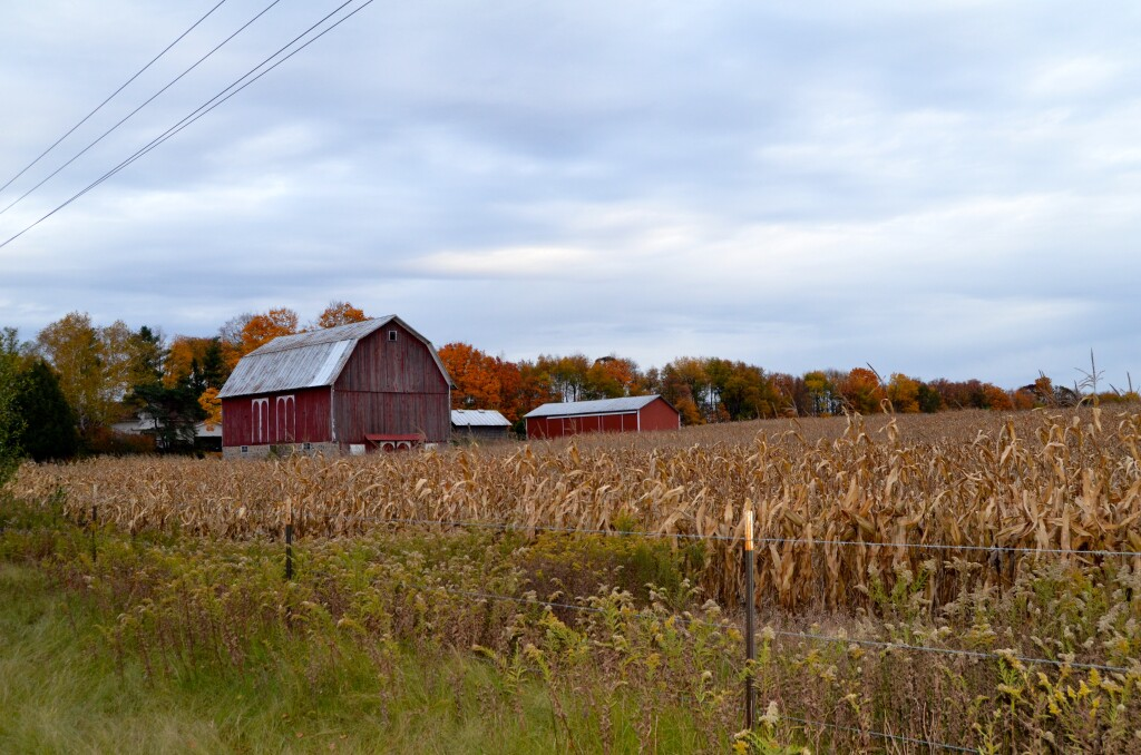 Kent County Fall Color Tour Barns and Farms