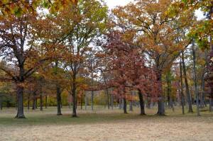Kent County Fall Color Tour Long Lake Park Trees