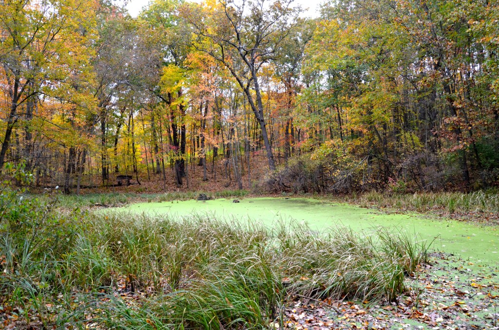 Kent County Fall Color Tour Seidman Park Swamp