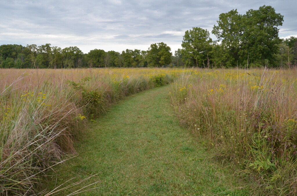 Lincoln Brick Park Meadow Habitat Trail