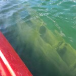 Kayaking Michigan: Drummond Island Shipwrecks in Scammon Cove (MAP)