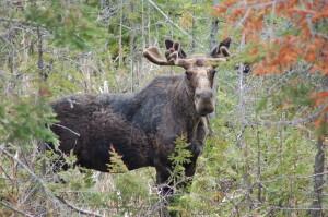 Moose 2021 Michigan Travel Goals