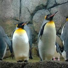 www.penguins.detroitzoo.org