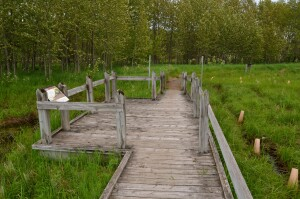 Marquette Presque Isle Park Bog Walk Nature