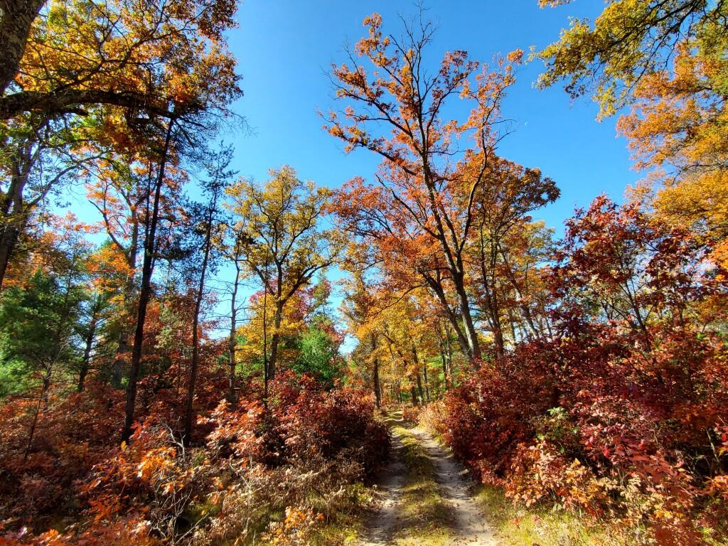 Fall color in Baldwin, October