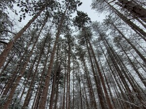 provin trails forest kent county parks winter recreation