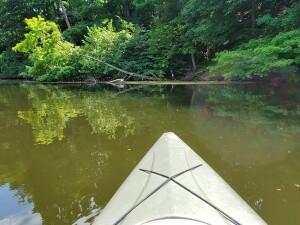 Flat River kayak heron encounter