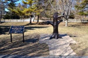Community Cooperative Ludington State Park Mason County Sculpture Trail