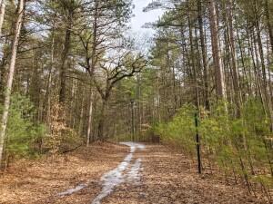 Kent County Parks White Pine Park Gowen