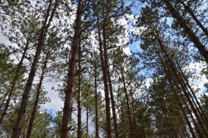 Wege Foundation Natural Area Lowell Michigan Treetops