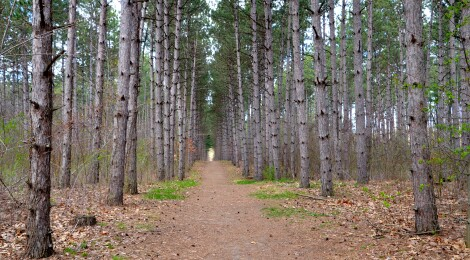 """Michigan Trail Tuesday: Wege Foundation Natural Area, Lowell's """"Outdoor Classroom"""""""