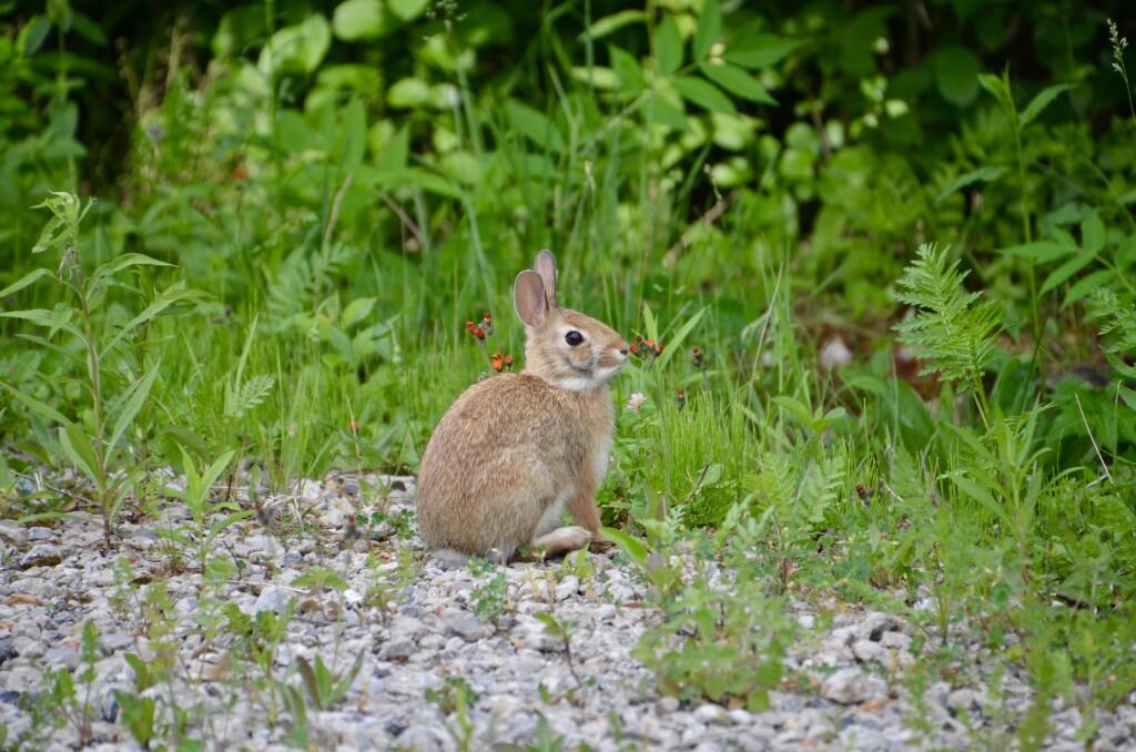 Awakon Park Onaway Michigan Bunny Rabbit