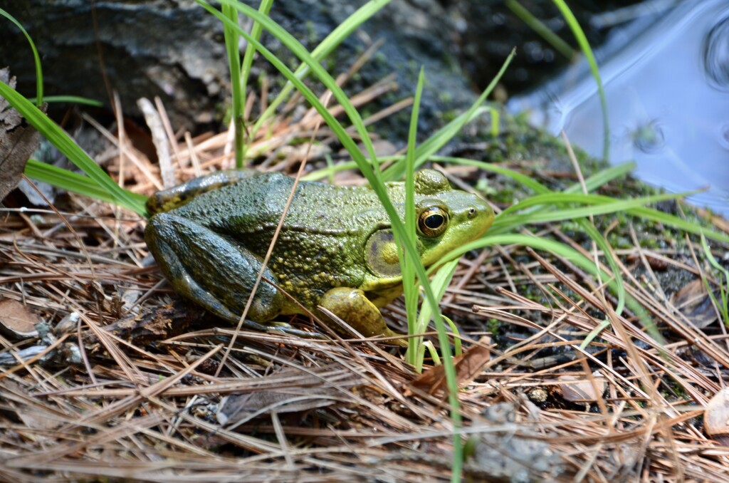 Dow Gardens Midland Michigan Frog Whiting Forest