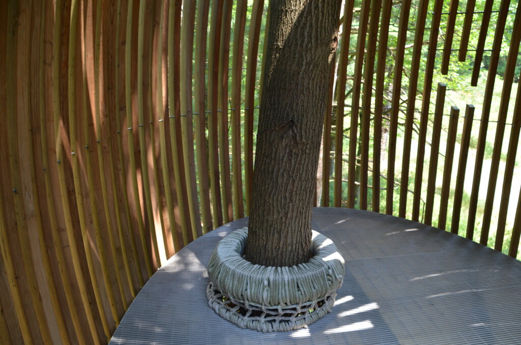 Dow Gardens Midland Michigan Whiting Forest Canopy Inside Pods