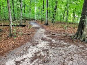 Warren Woods Sandy Trail Beech Maple Forest Michigan