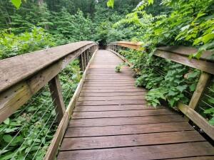 Warren Woods State Park Bridge Galien River Michigan