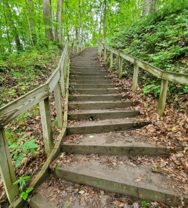 Warren Woods State Park Staircase
