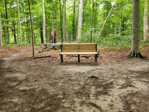 Warren Woods State Park Trail Bench Michigan