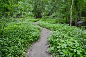Warren Woods State Park Trail Michigan