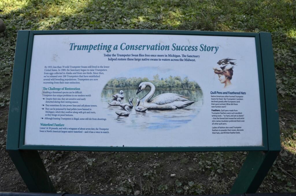 Kellogg Bird Sanctuary Augusta Michigan Trumpeter Swan Information
