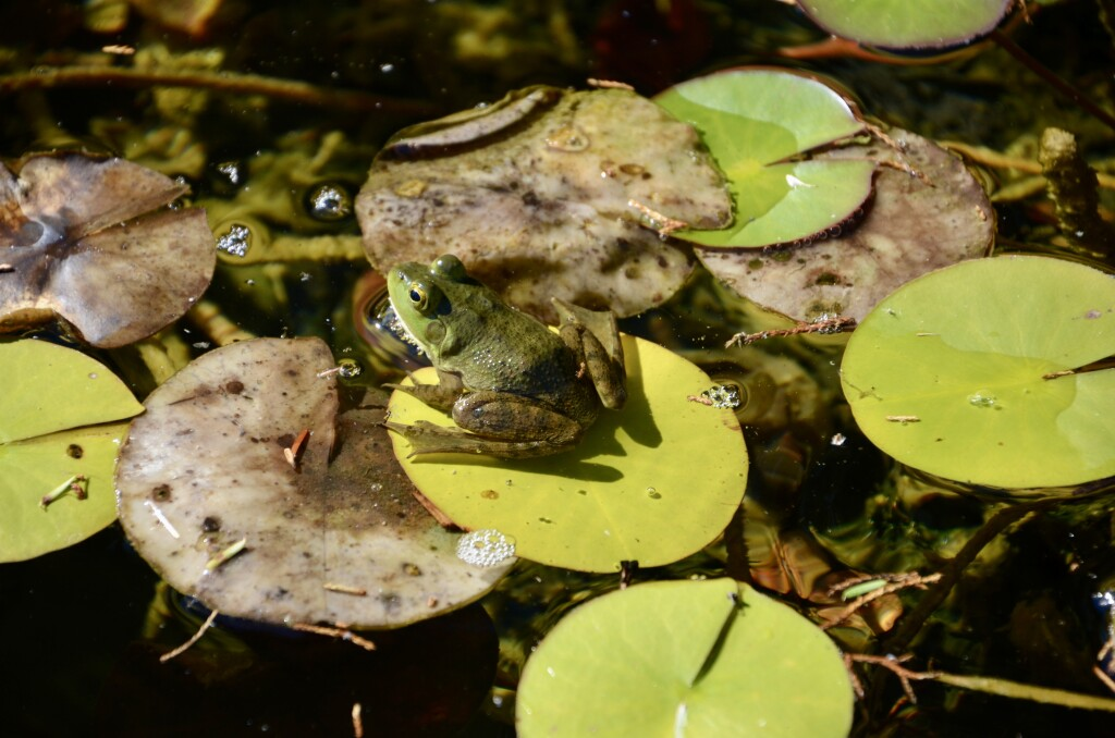 Kellogg Bird Sanctuary Frog Light Memorial Garden