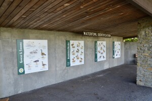 Kellogg Bird Sanctuary Waterfowl Information