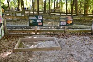 Zoorassic Park Binder Park Zoo Velociraptor Fossil Dig