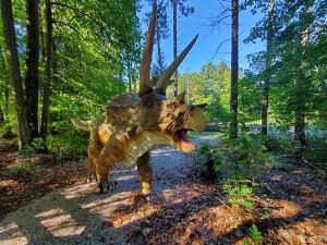 Zoorassic Park Triceratops Binder Park Zoo